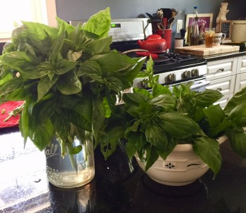 An Abundance of Basil