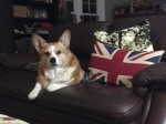 Winston, Not Your Majesty's Corgi
