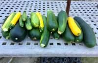 zucchini pile